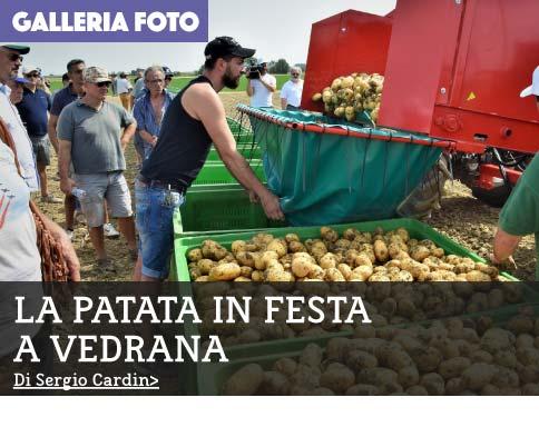 patatafesta